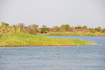 Island View On The Zambezi