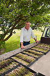 New Zealand, South Island, Marlborough, asparagus agriculture with Paul Scott of Scott's Asparagus. Photo copyright Lee Foster. Photo # 126435.