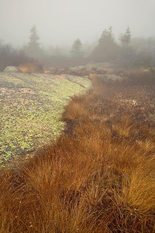 Fog at Cadillac Mountain in Acadia National Park, Maine