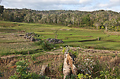 INDONESIA, Flores Archipelago, on the roads of Manggarai country; Kombo village