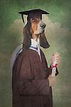 dog dressed as graduate, fantasy