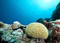 Coral Ball, Yap Micronesia (Photo by Matt Considine - Images of Asia Collection)