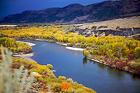 Fall Colors, Snake River, Ririe, Idaho, golden, cottonwood, aspen, Stormy sky,