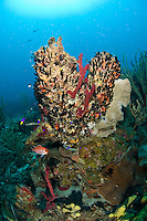 Underwater scenics at Salt River Canyon east, St. Croix, US Virgin Islands