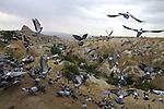Images of Turkey. Pigeon Valley. CAPPADOCIA