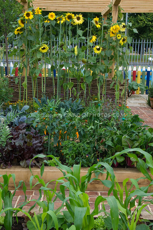 Vegetable garden with sunflowers and fence made of &quot;crayons&quot; for children