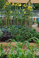 "Vegetable garden with sunflowers and fence made of ""crayons"" for children"