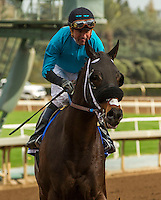 ARCADIA, CA  FEBRUARY 4: #3 St. Joe Bay, ridden by Kent Desormeaux, returns to the connections after winning the Palos Verdes Stakes (Grade ll) at Santa Anita Park, on February 4, 2017 in Arcadia, Ca.  (Photo by Casey Phillips/Eclipse Sportswire/Getty Images)