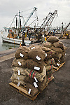 off-loading oysters from commercial fishing boats at Fulton Harbor, Rockport/Fulton, Texas, USA
