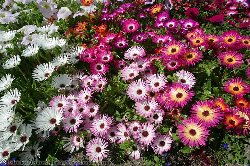 Flower garden, Skagway, Alaska