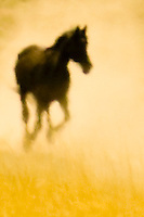 Horse running through dust, abstract, <br />