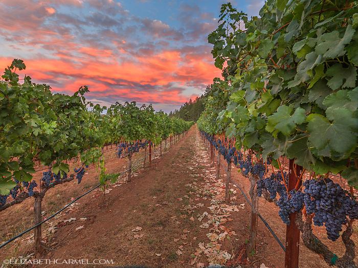 Harvest Sunset II