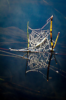 &quot;Web Reflection&quot;<br />