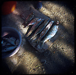 """A fisherman seperates fish for his family members to cook in the town of Pueblo Viejo de San Dionisio...The Isthmus of Tehuantapec, long a center for indigenous land ownership, is now embroiled in a land dispute over wind farm land...Called """"Mexico's little waist,"""" the Isthmus is a wind tunnel that links the Gulf of Mexico to the Pacific through mountain passes at the narrowest part of Mexico. The geographical funnel makes it one of the windiest places in North America and for a decade wind energy companies have been jostling to acquire land to power the likes of Coca-Cola and Wal Mart."""