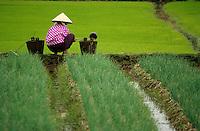 Viêt Nam - Vietnam