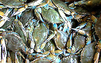 Louisiana Blue, blue crabs of Louisiana New Orleans