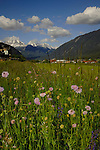 Spring flowers and mountains,Imst district, Tyrol/Tirol, Austria, Alps.