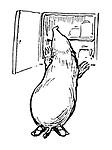 (Mole checking larder- illustration).