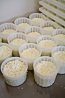 First stage in artisan cheese making at Fifth Town Artisan Cheese Co. in Prince Edward County, Ontario