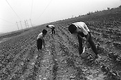 Three villagers tend their land in the town of Anghren, in the Ferghana valley. Ferghana is historically a lush verdant valley used by traders on the old Silk Road trading route as a place of rest and refreshement. Now Ferghana is becoming known as a hotbed of Islamic Fundamentalism. Uzbekistan