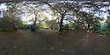 2014_10_29_yew_trees