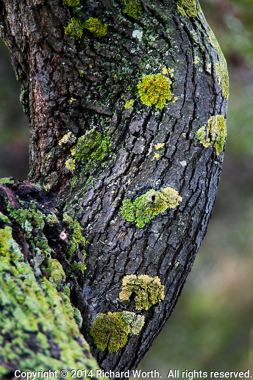 Patches of green moss, like decorations on a deeply creased tree trunk.
