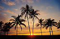 Coconut Palm trees at sunset, Mauna Lani Resort, Kohala Coast, Island of Hawaii..