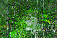 &quot;GREEN LEAVES AND LACE&quot;<br />