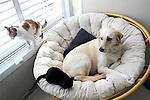 Happy family cats and dog