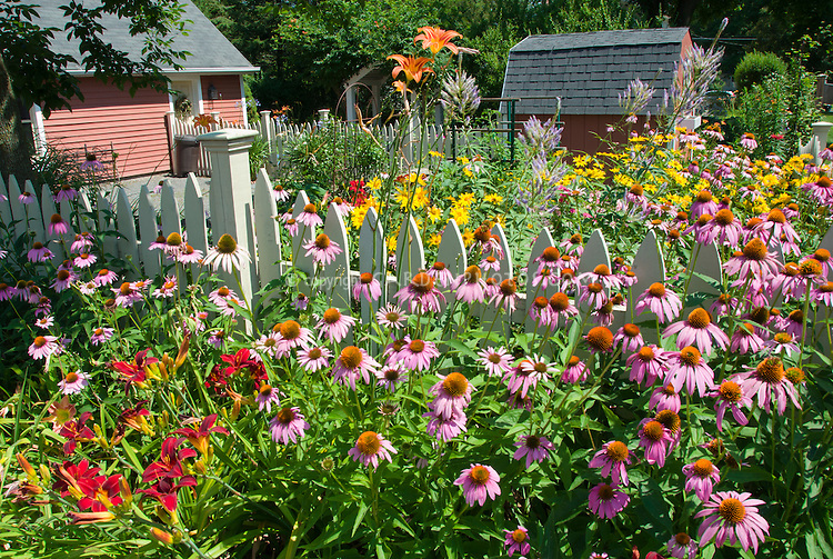 Perennial flower garden in sunny summer backyard Plant Flower