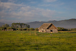 Idaho, Eastern, Driggs. An old log cabin in the Teton Valley in spring.