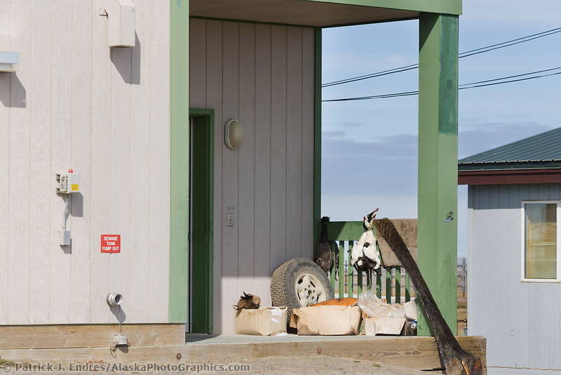Ducks and subsistence harvest meat on the porch of a home in Utqiagvik (Barrow), Alaska.