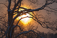 Backlit Snowy Tree Branches at Sunset