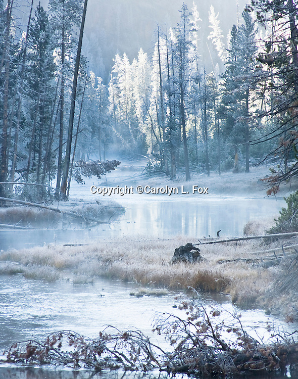 The Gibbon River winds through the trees in Yellowstone National Park.  Light, that has just come over the mountains, illuminates the scene.