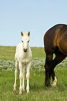 Horses-Colts-Foals