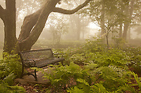 The canopy of oak trees shelters the ferns and flower gardens, and offers shade and serenity to visitors. Enger Park, Duluth, Minnesota.