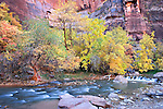 autumn trees and waterfall along the Virgin River in Zion National Park, Utah, USA