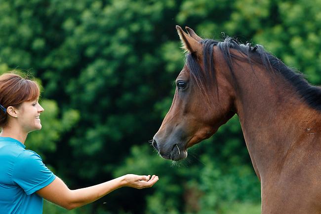 .::Ficha de Shiny::. Smiling-woman-reaching-out-hand-to-greet-bay-Arabian-horse-in-profile-MG-7231