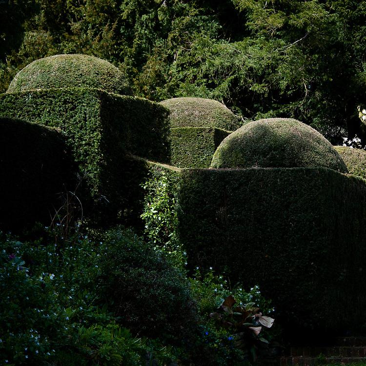 Topiary, Hinton Ampner, Hampshire, late April.