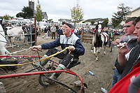 4/10/2010.  Riders in the trotting lane at the Ballinasloe Horse Fair, Ballinasloe, Ireland. Picture James Horan