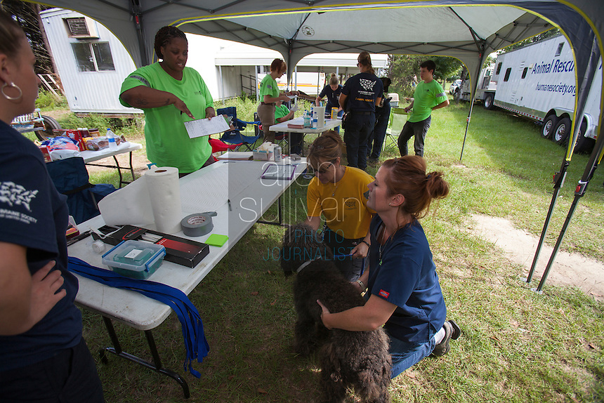 Dogs are checked at the vet tables during a raid on a puppy mill in Johnston, SC on Tuesday, Sept. 11, 2012. HSUS workers found over 200 dogs, nine horses and 30-40 fowl.