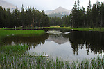 Pond near Mt. Dana