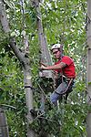 160711 Tall Trees