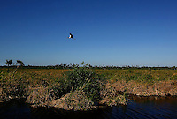 Everglades, Fla. -- Feb. 18, 2007 -- A wood stork takes flight over the grassy swamp near Big Cypress Bend north of Everglades National Park on the southern tip of Florida on Sunday, Feb. 18, 2007.