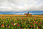 The Wooden Shoe Tulip Fesival in Woodburn, Oregon