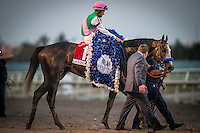HALLANDALE BEACH, FL - JAN 28: Arrogate #1, ridden by Mike Smith wins The Pegasus World Cup Invitational at Gulfstream Park Race Course on January 28, 2017 in Hallandale Beach, Florida. (Photo by Alex Evers/Eclipse Sportswire/Getty Images)
