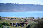 Guided walk viewing elephant seals at Ano Nuevo State Park