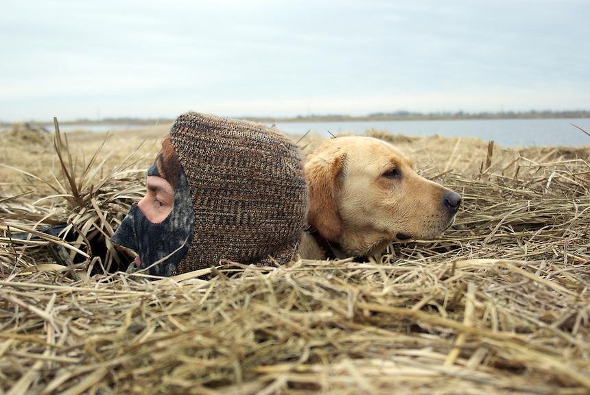 Goose hunter and retriever in pit blind, Bayou Meto, Arkansas