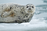 Seals & Pinnepeds