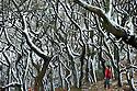 2014_12_29_frozen_woodland